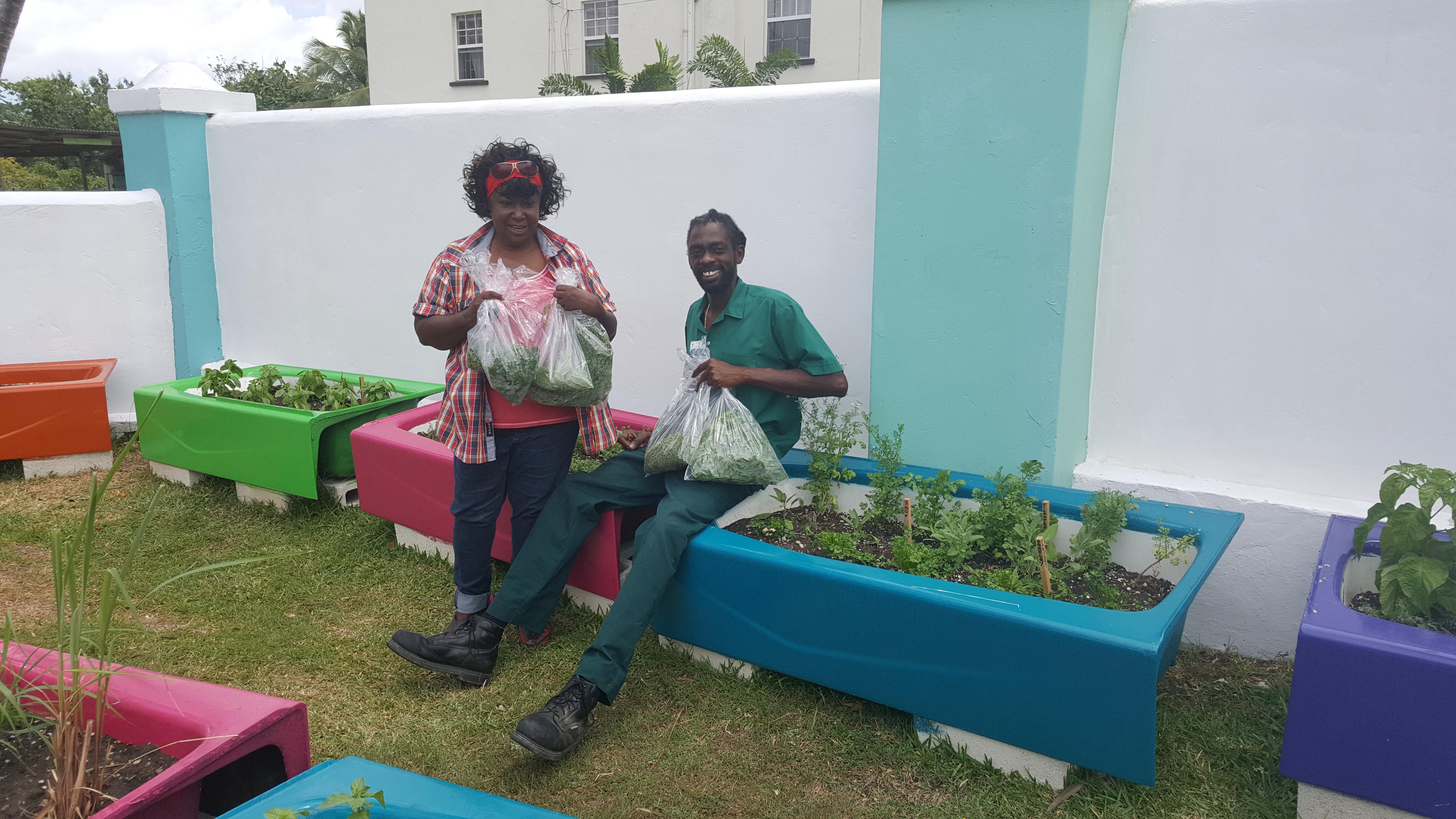Bougainvillea Herb Garden